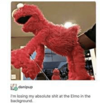 Elmo: i'm losing my absolute shit at the Elmo in the  background