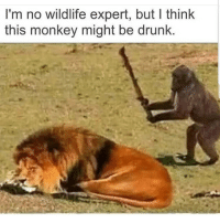 Drunk, Latinos, and Memes: I'm no wildlife expert, but I think  this monkey might be drunk. Don't do it 😥😥😂 🔥 Follow Us 👉 @latinoswithattitude 🔥 latinosbelike latinasbelike latinoproblems mexicansbelike mexican mexicanproblems hispanicsbelike hispanic hispanicproblems latina latinas latino latinos hispanicsbelike