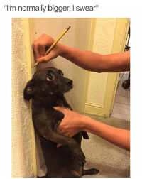 """Funny, I Swear, and More: """"I'm normally bigger, I swear"""" Measuring my wiener 