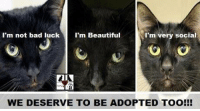 Bad, Beautiful, and Memes: I'm not bad luck  I'm Beautiful  I'm very social  WE DESERVE TO BE ADOPTED TOO!!! #crazycatladiesunite #funny #cats