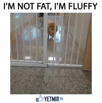 Memes, 🤖, and Fluffy: I'M NOT FAT, l'M FLUFFY  YETMIR