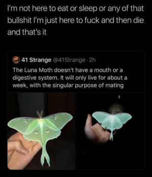 Live For: I'm not here to eat or sleep or any of that  bullshit I'm just here to fuck and then die  and that's it  41 Strange @41Strange 2h  The Luna Moth doesn't have a mouth or a  digestive system. It will only live for about a  week, with the singular purpose of mating