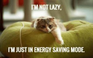 Energy, Funny, and Lazy: I'M NOT LAZY  I'M JUST IN ENERGY SAVING MODE Funny cat of the day!