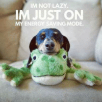 Energy, Lazy, and Memes: IM NOT LAZY.  IM JUST ON  ENERGY SAVING MODE. Precious!