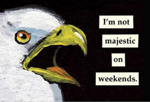 The Mincing Mockingbird Guide To Troubled Birds funny things: I'm not  majestic  on  weekends. The Mincing Mockingbird Guide To Troubled Birds funny things