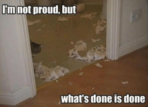 Cats, Memes, and Proud: I'm not proud, but  what's done is done Cats memes