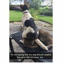 Funny, Memes, and Respect: I'm not saying that my dog should respect  the cat a little bit more, but... Follow me @hilarious.ted for more animal memes