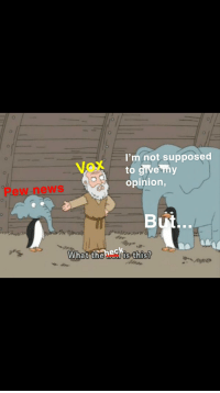 Hello, Meme, and News: I'm not supposed  to give my  opinion,  Vox  Pew news  the nedhis this?