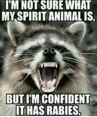Advice, Animals, and Anime: I'M NOT SURE WHAT  MY SPIRIT ANIMAL IS  BUT ITM CONFIDENT  ITHAS RABIES Awww advice animal