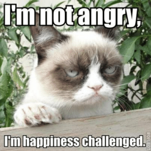 60+ Angry Cat Funny Memes for Whatsapp: I'm notangry  I'm happiness challenged.  ROFLBOT 60+ Angry Cat Funny Memes for Whatsapp