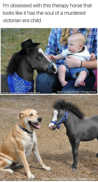 Victorian Era: I'm obsessed with this therapy horse that  looks like it has the soul of a murdered  victorian era child   Gentle Carouse/ Mihiature Therapy Horses  Gentle Carousel Miniature Therapy Horses   Gente Cerouse Mitilaure herapy Horses Gentle Carousel Mimature Therapy Ftorses
