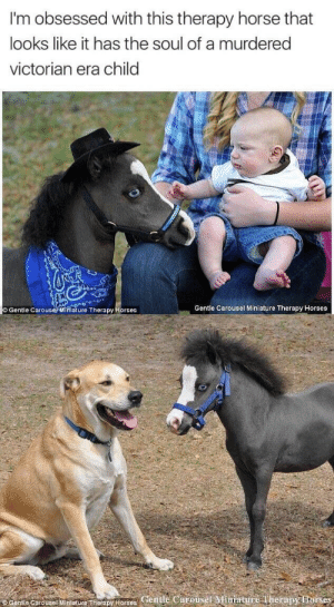 Therapy horse: I'm obsessed with this therapy horse that  looks like it has the soul of a murdered  victorian era child  Gentle Carouse/Mih  iature Therapy Horses  Gentle Carousel Miniature Therapy Horses  o Gentle Carousel Miniature Therapy Horses Therapy horse