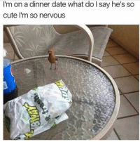 @cabbagecatmemes is 🔥: I'm on a dinner date what do l say he's so  cute I'm so nervous @cabbagecatmemes is 🔥