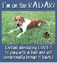 We don't like to ask for donations all the time, but this is how we roll.  Your donations and your support keep us going so we can help the next at-risk shelter dog. Delilah needs $150.: I'm on the RADARI  KADAKAOos  Delilah absolutely LOVES  to play with a ball and will  occasionally brings it back! We don't like to ask for donations all the time, but this is how we roll.  Your donations and your support keep us going so we can help the next at-risk shelter dog. Delilah needs $150.