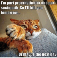For more cute pics LIKE us at The Purrfect Feline Page: I'm part procrastinator and part  Sociopath. So I'll kill you  tomorrow  Or maybe the next day For more cute pics LIKE us at The Purrfect Feline Page