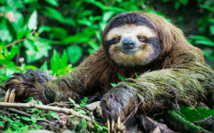 I'm pretty sure my spirit animal is a sloth.: I'm pretty sure my spirit animal is a sloth.