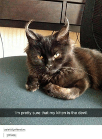 No it's maleficent!: I'm pretty sure that my kitten is the devil.  tastefully offensive  I [omoza] No it's maleficent!