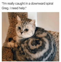 "Bad, Cats, and Crazy: ""I'm really caught in a downward spiral  Greg. need help."" Lmao😂follow @codmemenation (me) for more! Like for good luck👊 ignore for bad luck😩 Tag a friend😎👍 ➖➖➖➖➖➖➖➖➖➖➖➖➖➖➖➖➖✔Credit:unknown DM for credit Follow my backup accounts @cod_meme_nation & @animal.angel ➖➖➖➖➖➖➖➖➖➖➖➖➖➖➖ ⏬ Hashtags (ignore) ⏬ cod game gaming gamer meme drake dog dogs cat cats trump 2017 battlefield battlefield1 gta gtav gta5 gtavonline comedy savage humor gamers Relatable Hilarious KimKardashian KylieJenner Squad Crazy Omg Epic"
