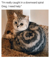 "Funny, Help, and Catnip: ""I'm really caught in a downward spiral  Greg. need help."" Catnip is a real issue"