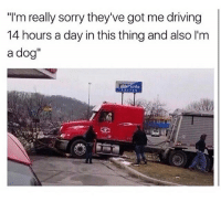 "Driving, Memes, and Sorry: ""I'm really sorry they've got me driving  14 hours a day in this thing and also 'm  a dog""  aide damn"