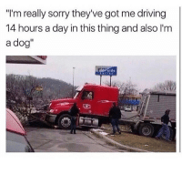 "Driving, Memes, and Sorry: ""I'm really sorry they've got me driving  14 hours a day in this thing and also 'm  a dog""  vert de doggo :~)) @nuggeret"