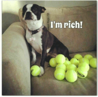 "Tumblr, Blog, and Http: I'm rich! <p><a href=""http://thatdamndogofmine.tumblr.com/post/171751399182/tennis-balls-are-archies-pacifiers"" class=""tumblr_blog"">thatdamndogofmine</a>:</p>  <blockquote><p>Tennis balls are Archie's pacifiers.</p></blockquote>"