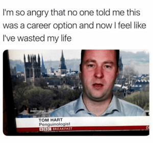 Best career option by Holofan4life FOLLOW 4 MORE MEMES.: I'm so angry that no one told me this  was a career option and now I feel like  I've wasted my life  том НART  Penguinologist  BBC BREAKFAST Best career option by Holofan4life FOLLOW 4 MORE MEMES.