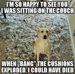 "50+ Animal Memes That Are Guaranteed to Make You Giggle #animalmemes #dogmemesfunny #dogmemes #animalmemes  - Lovely Animals World: IM SO HAPPY TOSEE  WASSITTING ON THE COUCH  YOU  WHEN BANG"" THE CUSHIONS  EXPLODED,ICOULD HAVE DIED 50+ Animal Memes That Are Guaranteed to Make You Giggle #animalmemes #dogmemesfunny #dogmemes #animalmemes  - Lovely Animals World"