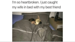 Bad, Best Friend, and Tumblr: I'm so heartbroken. I just caught  my wife in bed with my best friend awesomacious:  i honestly feel bad