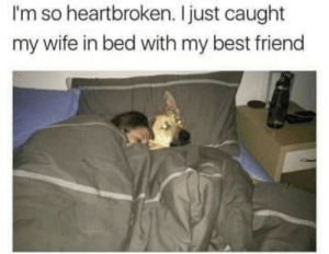 A classic. by homerogaming930 FOLLOW 4 MORE MEMES.: I'm so heartbroken. Ijust caught  my wife in bed with my best friend A classic. by homerogaming930 FOLLOW 4 MORE MEMES.