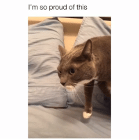 Meme, Memes, and Proud: I'm so proud of this Volume all the way up! 😂 Credit: @meme.kittykitkat