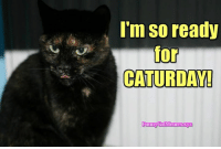 From Funny Cat Memes: I'm so ready  for  CATURDAY!  unn From Funny Cat Memes