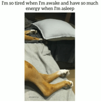 9gag, Animals, and Dogs: I'm so tired when I'm awake and have so much  energy when I'm asleep  @funpawcare I can't even. This girl is the cutest! ❤️😂 😭 (Volume up to hear me losing it) Tag a dreamer @funpawcare @itsmari dream dreamer dreams dreamy puppylove dogwalking doglover puppies puppy pupper puppers puppiesofinstagram dogstagram boxer boxers boxeroftheday boxerofinstagram dogs dog funny paw paws love dogsofinstagram doggie doggies newdog doglove doglovers furbaby @9gag @buzzfeed @buzzfeedanimals @dogsofinstagram @instagram @dogsbeingbasic @dogs @failsclip @funnyfailvideos @fun_bestvids @lol_vines @bestvidsnow @failsvids @animals.co @thedodo @boopmynose @dogsofinstaworld @pups @pawz @puppystagrams @animal_unity @dogs.lovers @animalove.co @cutepetclub @puppyscene @theellenshow @bestvinesnow