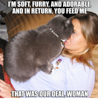 I'M SOFT, FURRY AND ADORABLE  AND IN RETURN, YOU FEED ME  THAT WAS OUR DEAL WOMAN Hungry cat plays no games