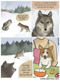 """Future, Regret, and Sorry: I'm sorry; i've made my decision  They care for me, and i for them.  Is the best for our future  Don't go with  the humans  brother  Someday  you will  regret what  you are  doing, farewell  WWW.SEPHKo.cOM <p>No regrets. via /r/wholesomememes <a href=""""http://ift.tt/2FYXt7e"""">http://ift.tt/2FYXt7e</a></p>"""
