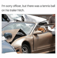 Funny, Sorry, and Struggle: I'm sorry officer, but there was a tennis ball  on his trailer hitch. If you can't sniff butts, you'll never understand his struggle