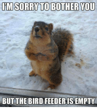 Country cutie: IM SORRY TO BOTHER YOU  BUT THE BIRD FEEDER IS EMPTY Country cutie
