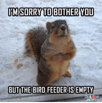Hey, squirrels gotta eat too! :-D: IM SORRY TO BOTHER YOU  BUT THE BIRD FEEDER ISEMPTY Hey, squirrels gotta eat too! :-D