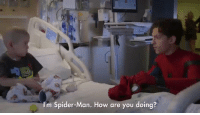 Spider, SpiderMan, and Girl Memes: I'm Spider-Man. How are you doing? Tom Holland is such a sweet human being  https://t.co/9uODsROkaL