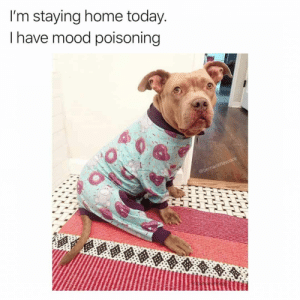 Dog Memes Of The Day 30 Pics – Ep53 #animalmemes #dogmemes #memes #dogs - Lovely Animals World: I'm staying home today.  Ihave mood poisoning  @bernadettevcook Dog Memes Of The Day 30 Pics – Ep53 #animalmemes #dogmemes #memes #dogs - Lovely Animals World
