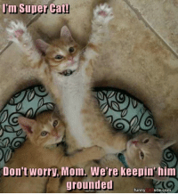 Cat Memes: Im Super Cat!  Don't worry, Mom. We're keepin'him  grounded  funny  CAT  site.com