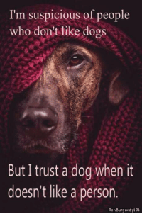 burg: I'm suspicious of people  who don't like dogs  But I trust a dog when it  doesn't like a person  Ron Burg undyl 01