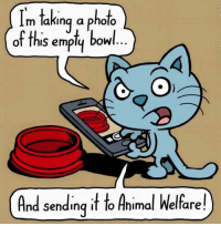 This is abuse!  http://bit.ly/2fjX929: Im taking a photo  of ths em  bowl  And sending it to Animal Welfare! This is abuse!  http://bit.ly/2fjX929