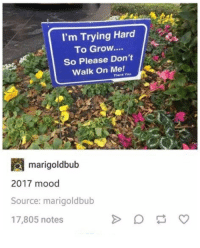 Mood, Thank You, and Humans of Tumblr: I'm Trying Hard  To Grow....  So Please Don't  Walk On Me!  Thank You  m arigoldbub  2017 mood  Source: marigoldbub  17,805 notes