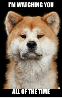 I'M WATCHING YOU  ALL OF THE TIME ~Obaasan Doge