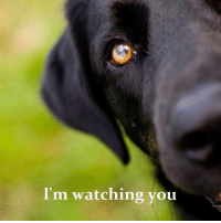 I'm watching you Yes you are