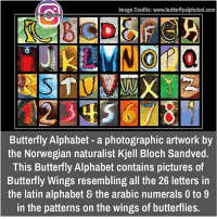 Memes, Alphabet, and Butterfly: Image Credits: www.butterflyalphabet.com  Fact Point  Butterfly Alphabet a photographic artwork by  the Norwegian naturalist Kjell Bloch Sandved.  This Butterfly Alphabet contains pictures of  Butterfly Wings resembling all the 26 letters in  the latin alphabet the arabic numerals 0 to 9  in the patterns on the wings of butterflies. did you know fact point , education amazing dyk unknown facts daily facts💯 didyouknow follow follow4follow f4f factpoint instafact awesome world worldfacts like like4ike tag friends Don't forget to tag your friends 🤘