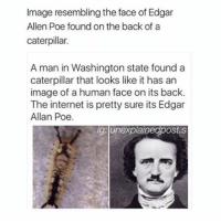Memes, Edgar Allan Poe, and 🤖: Image resembling the face of Edgar  Allen Poe found on the back of a  caterpillar.  A man in Washington state found a  caterpillar that looks like it has an  image of a human face on its back.  The internet is pretty sure its Edgar  Allan Poe.  ig unexplainegpostes :O