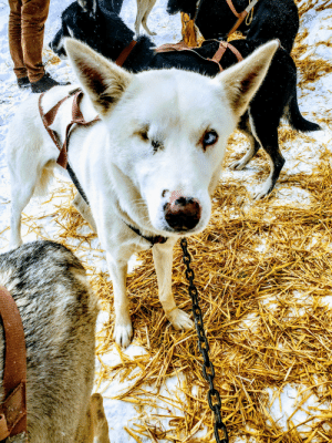 Define, Image, and Dog: [Image] This one-eyed dog is the leader of a sled team. Your circumstances do not define your potential. If she can do it, so can you!
