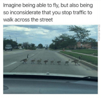 Memes, Traffic, and 🤖: Imagine being able to fly, but also being  so inconsiderate that you stop traffic to  walk across the street @tank.sinatra is the undisputed King of Memes